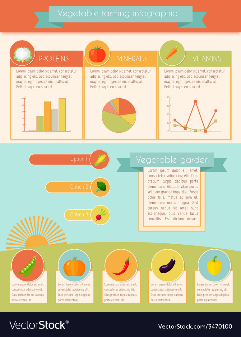 Vegetables infographic set vector | Price: 1 Credit (USD $1)