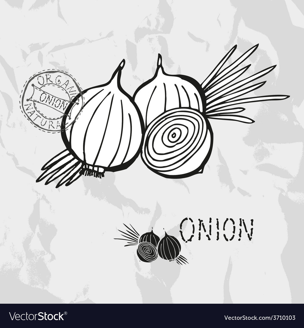 Hand drawn whole and sliced onions vector | Price: 1 Credit (USD $1)