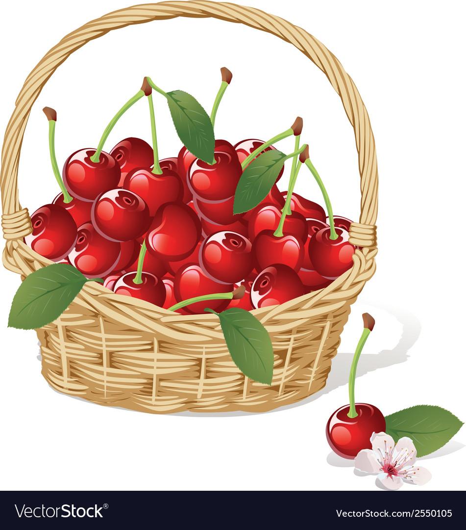 Cherry basket vector | Price: 1 Credit (USD $1)