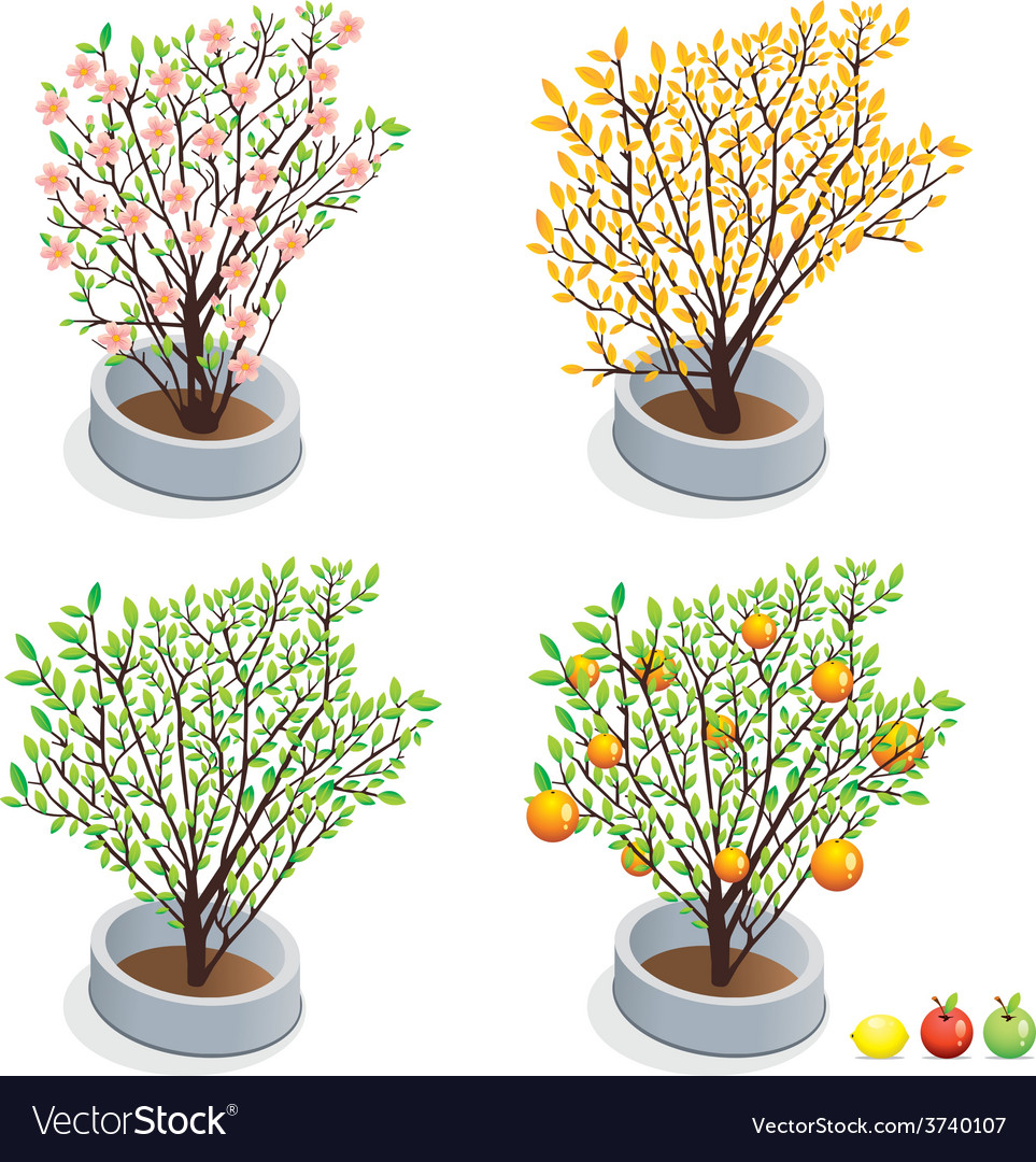 Trees in pots vector