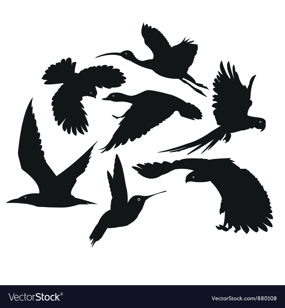 Flying bird silhouettes vector | Price: 1 Credit (USD $1)