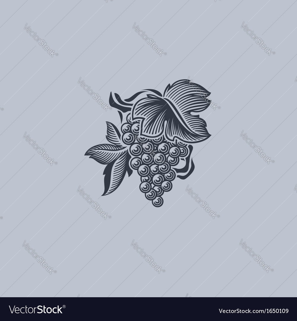 Grape with leaf - element for design vector | Price: 1 Credit (USD $1)