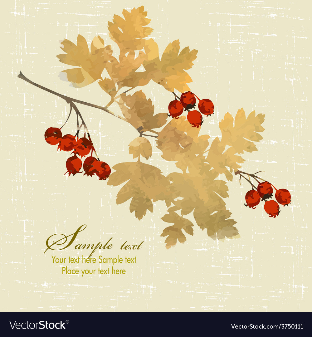 Branch of hawthorn vector | Price: 1 Credit (USD $1)