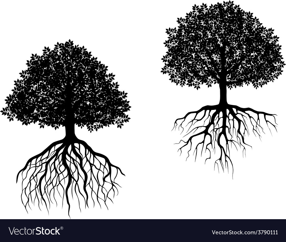 Two trees showing different root systems vector | Price: 1 Credit (USD $1)