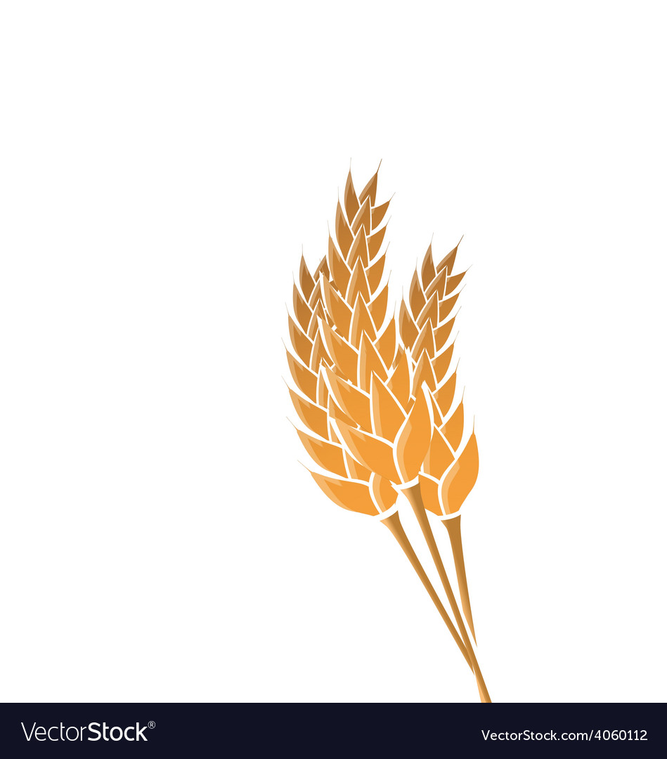 Ears of wheat isolated on white background vector | Price: 1 Credit (USD $1)