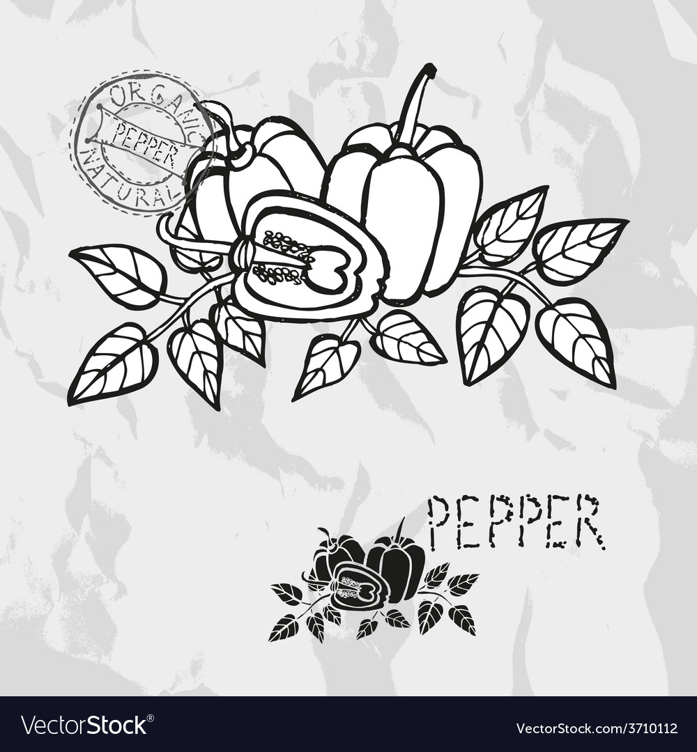 Hand drawn whole and sliced peppers vector | Price: 1 Credit (USD $1)