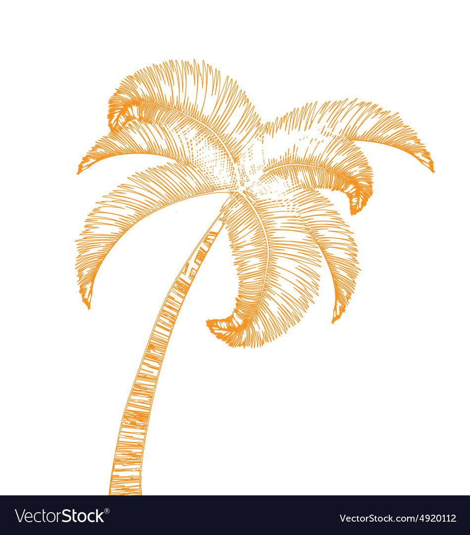 Handdrawn palm tree isolated on white vector