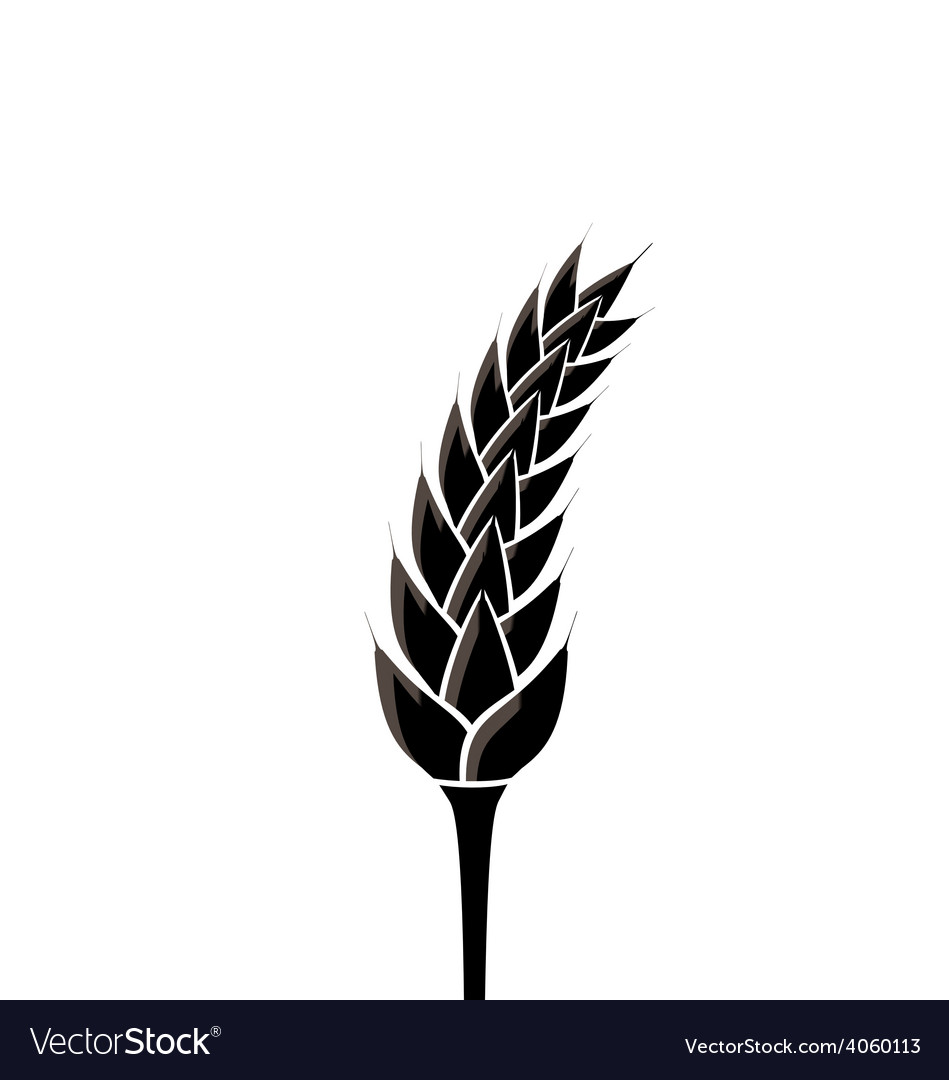 Black silhouette of spikelet of wheat isolated on vector | Price: 1 Credit (USD $1)
