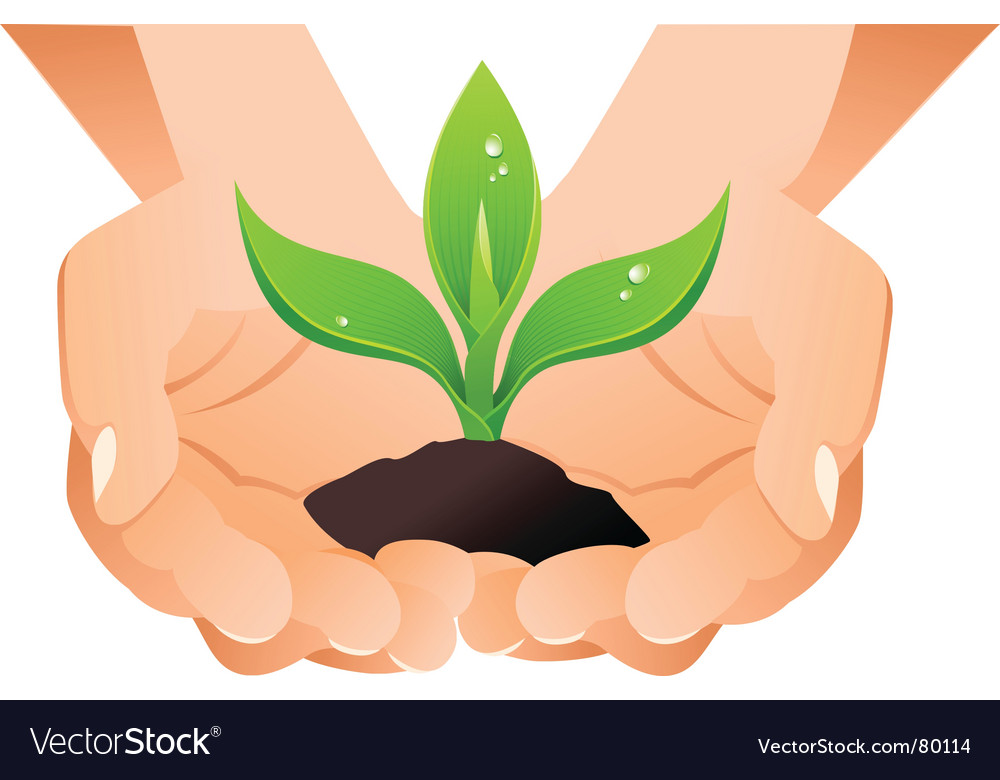 Hands with sprout vector | Price: 1 Credit (USD $1)