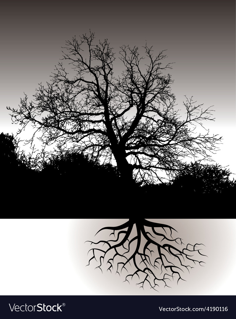 A tree with roots landscape vector | Price: 1 Credit (USD $1)