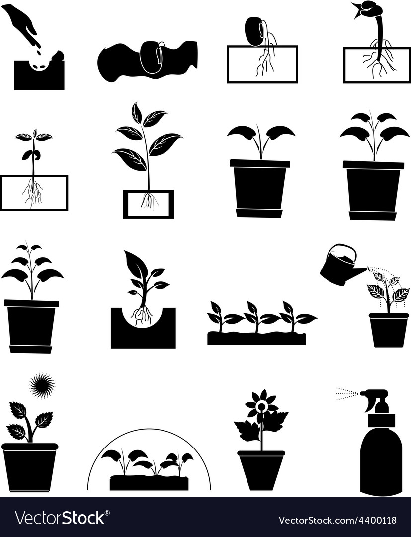 Plant growing icons set vector | Price: 3 Credit (USD $3)