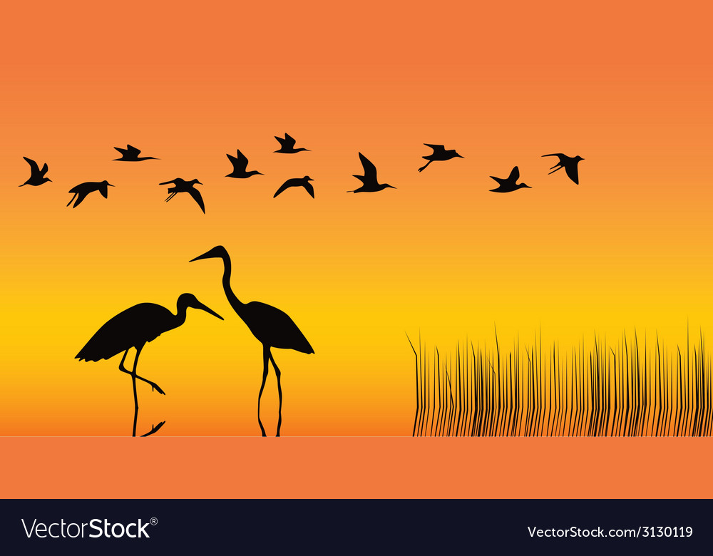Storks in the middle of a reservoir on an orange vector | Price: 1 Credit (USD $1)
