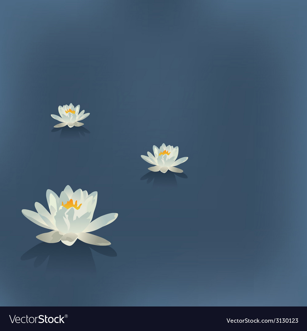 Three flowers of a lily in the lake on a blue vector | Price: 1 Credit (USD $1)