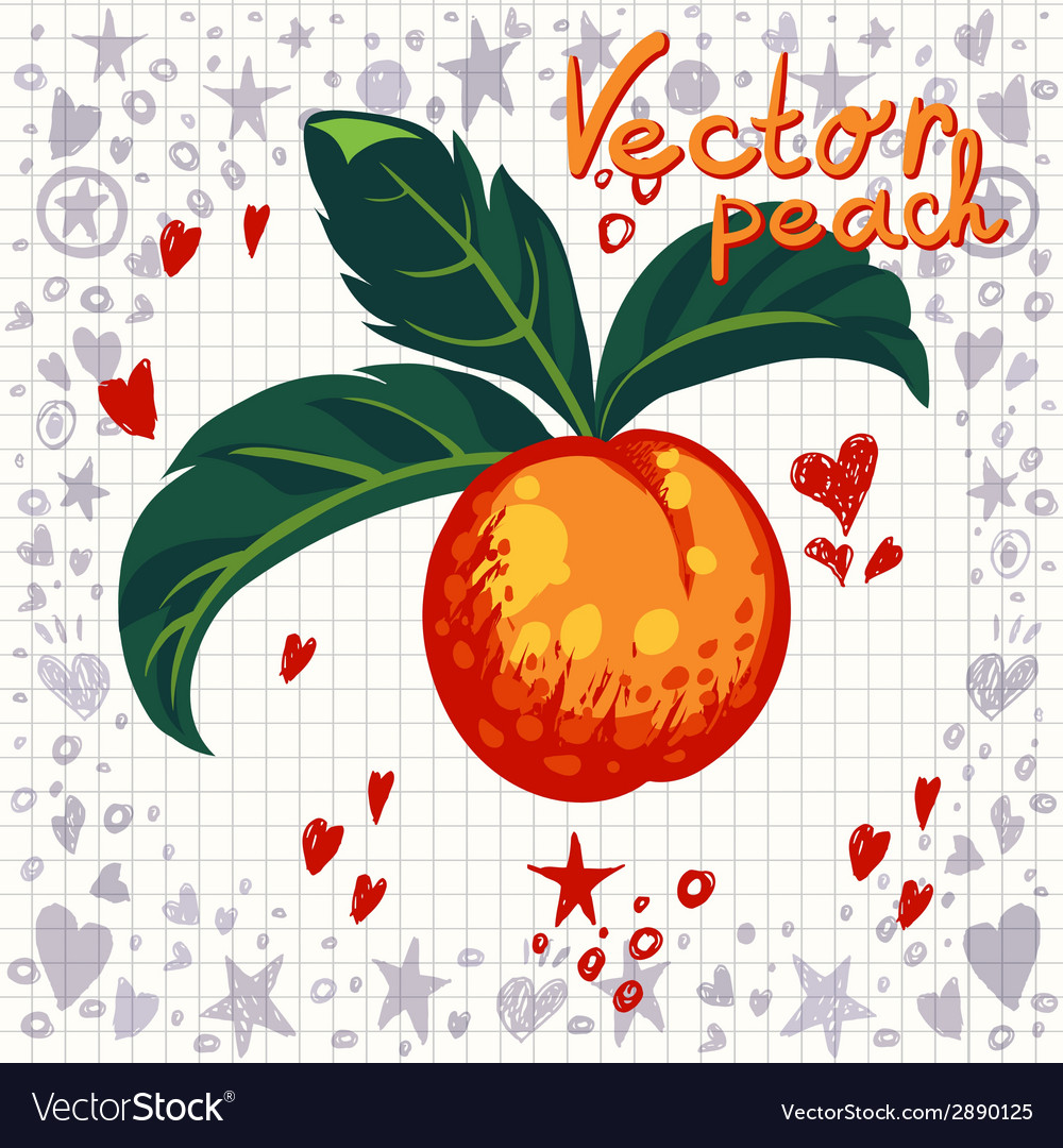 Fresh peach with leaves vector | Price: 1 Credit (USD $1)