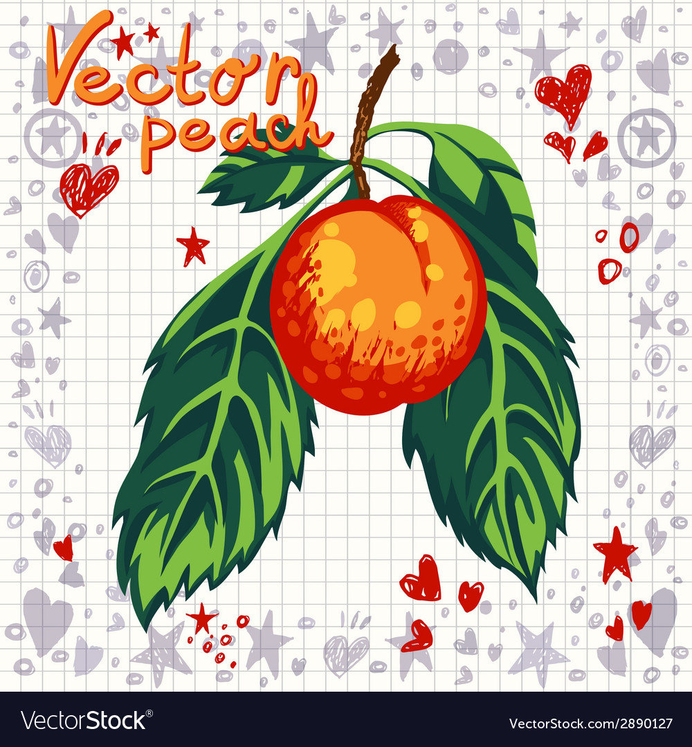 Fresh peach with leaves vector   Price: 1 Credit (USD $1)