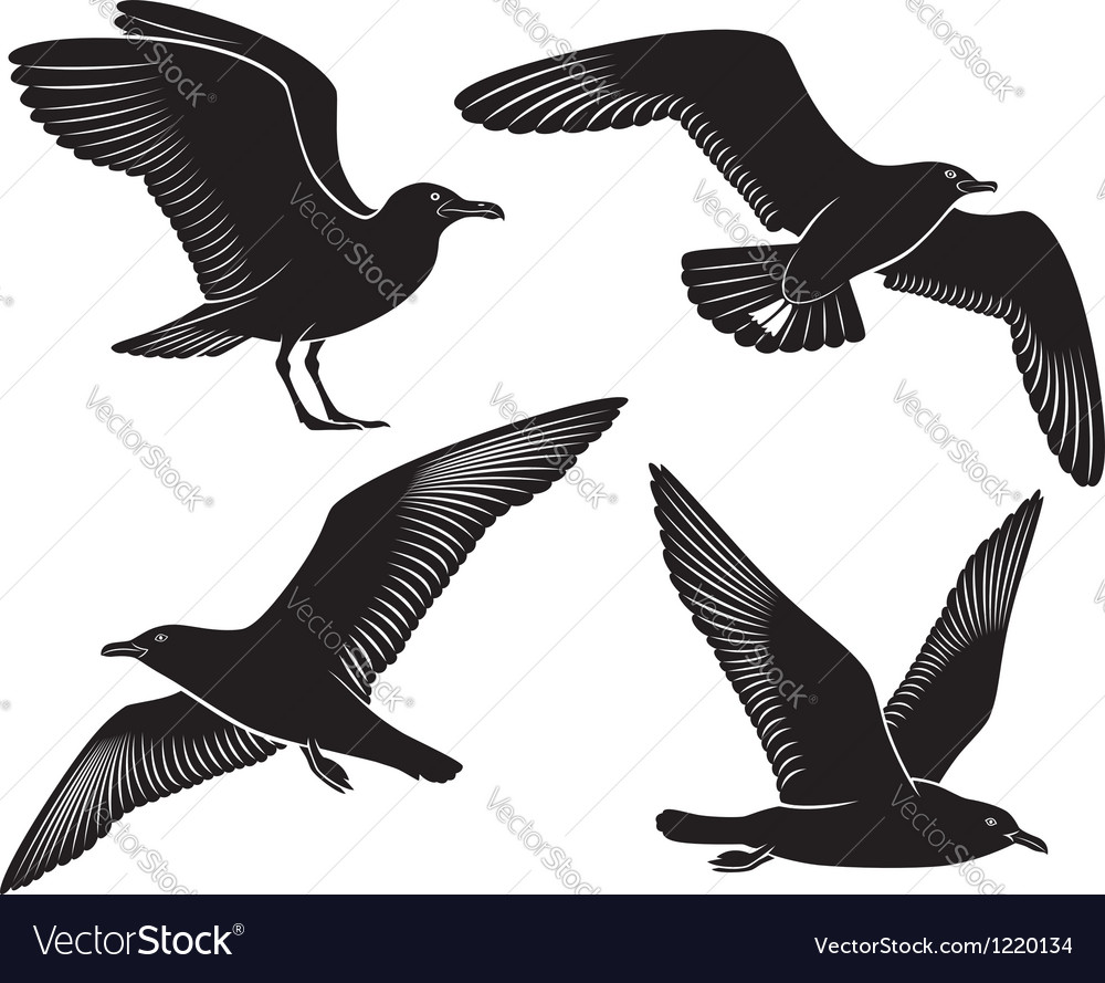 Bird seagull vector | Price: 1 Credit (USD $1)