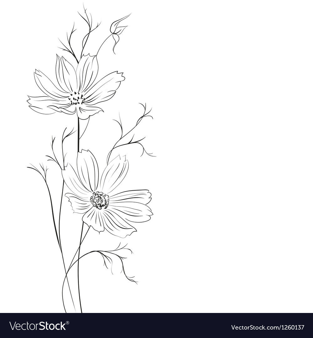 Buttercup flower vector | Price: 1 Credit (USD $1)