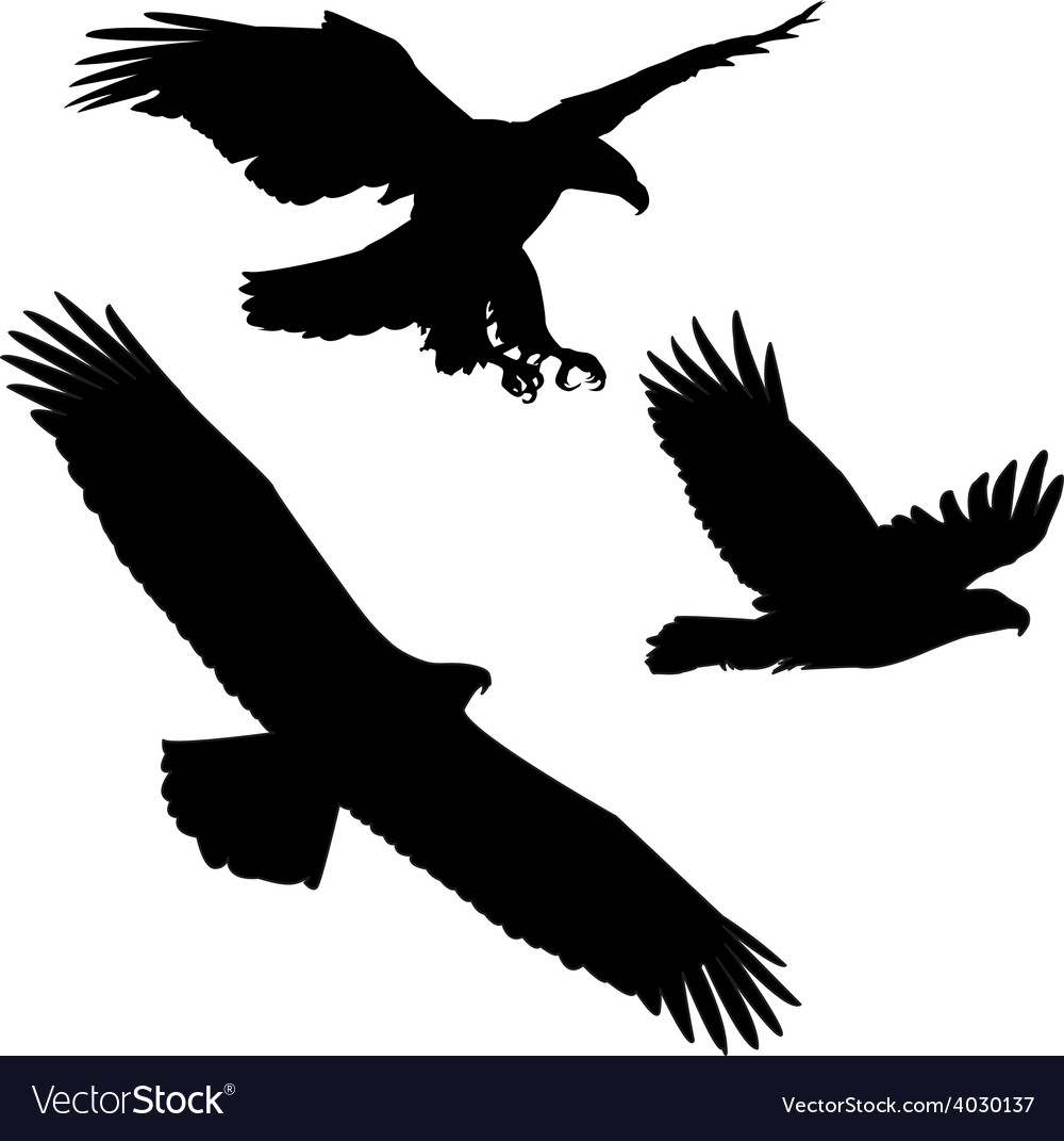 Set of black silhouette three eagles vector | Price: 1 Credit (USD $1)