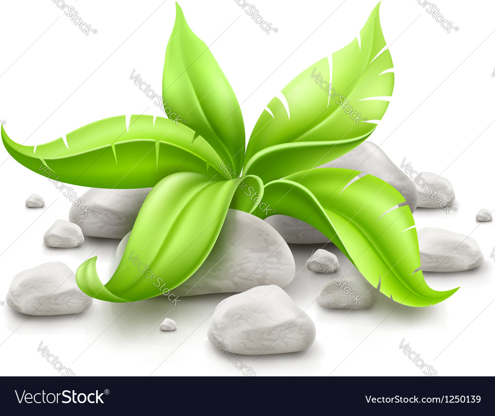 Plant with green leaves in vector | Price: 3 Credit (USD $3)