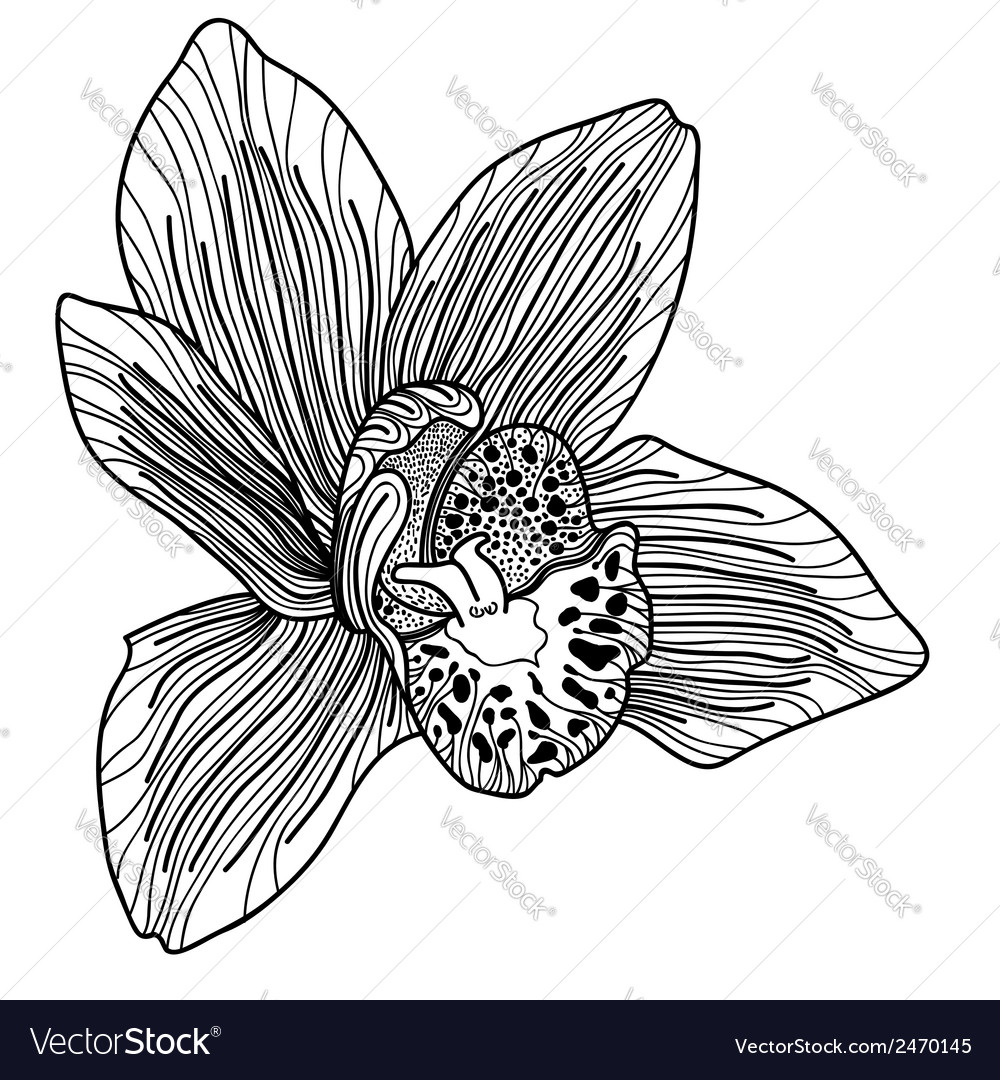 Exotic orchid drawing vector | Price: 1 Credit (USD $1)