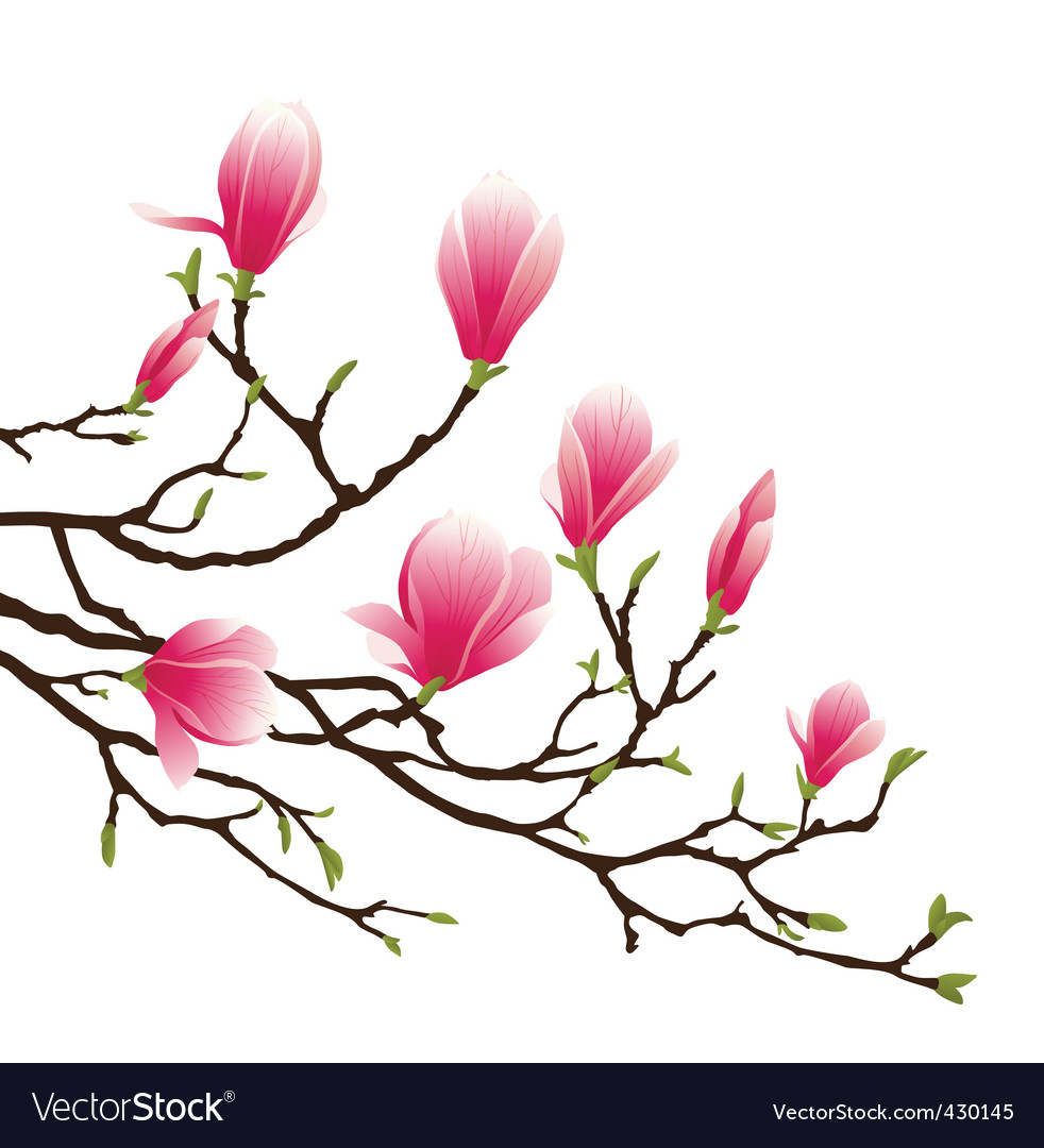 Magnolia blossom vector | Price: 1 Credit (USD $1)