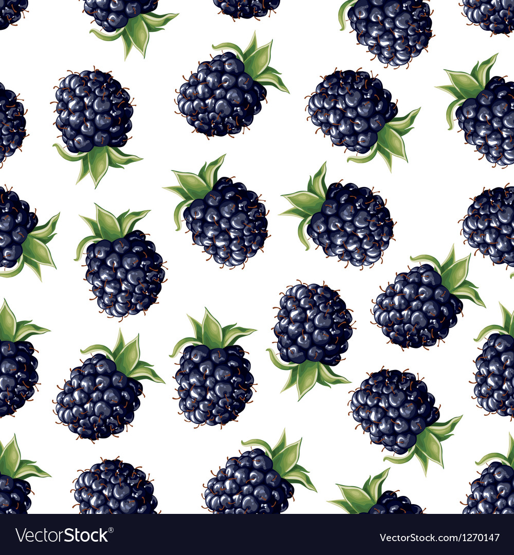 Blackberry pattern vector | Price: 3 Credit (USD $3)