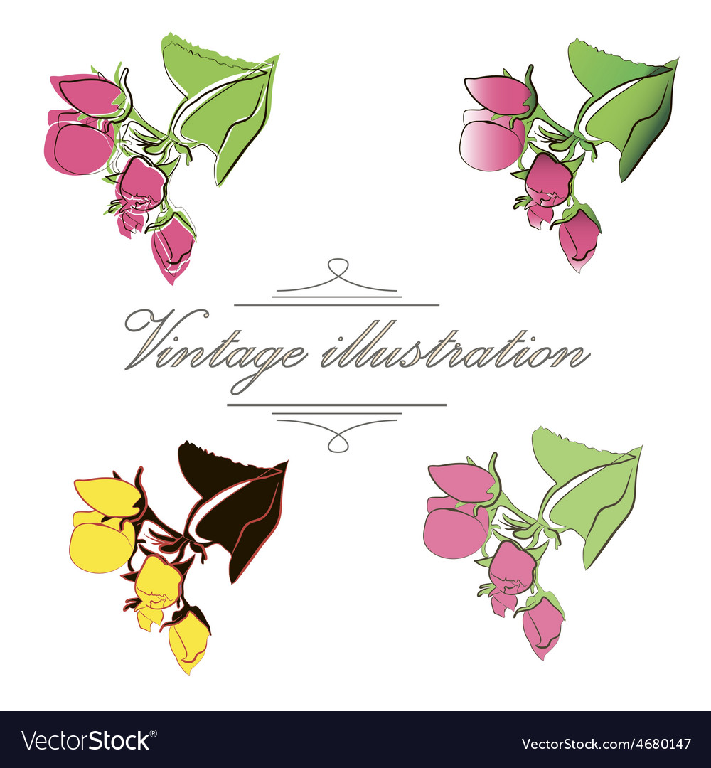 Vintage collection of bud apple vector | Price: 1 Credit (USD $1)