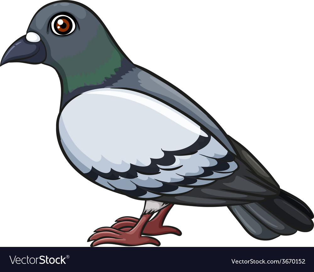 A pigeon vector | Price: 1 Credit (USD $1)