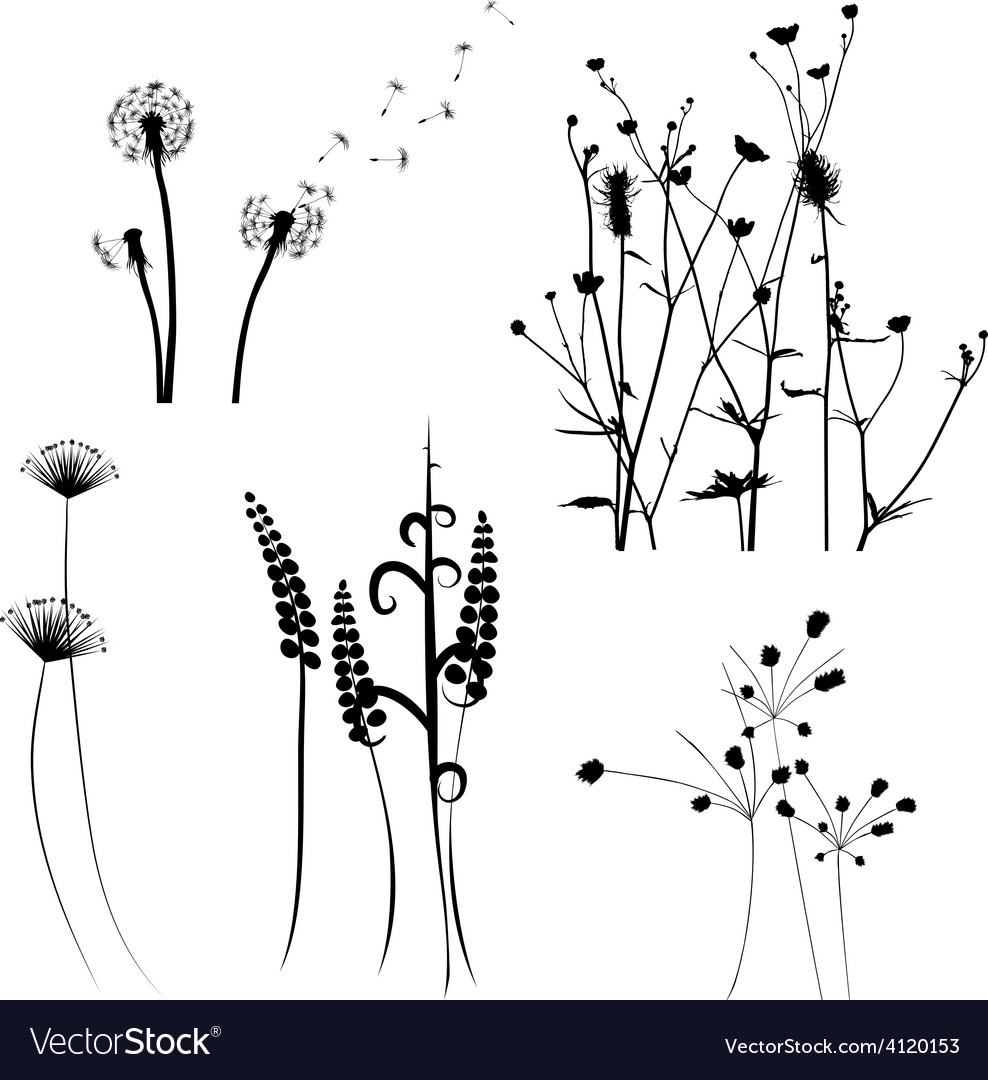 Meadow weeds silhouettes vector | Price: 1 Credit (USD $1)