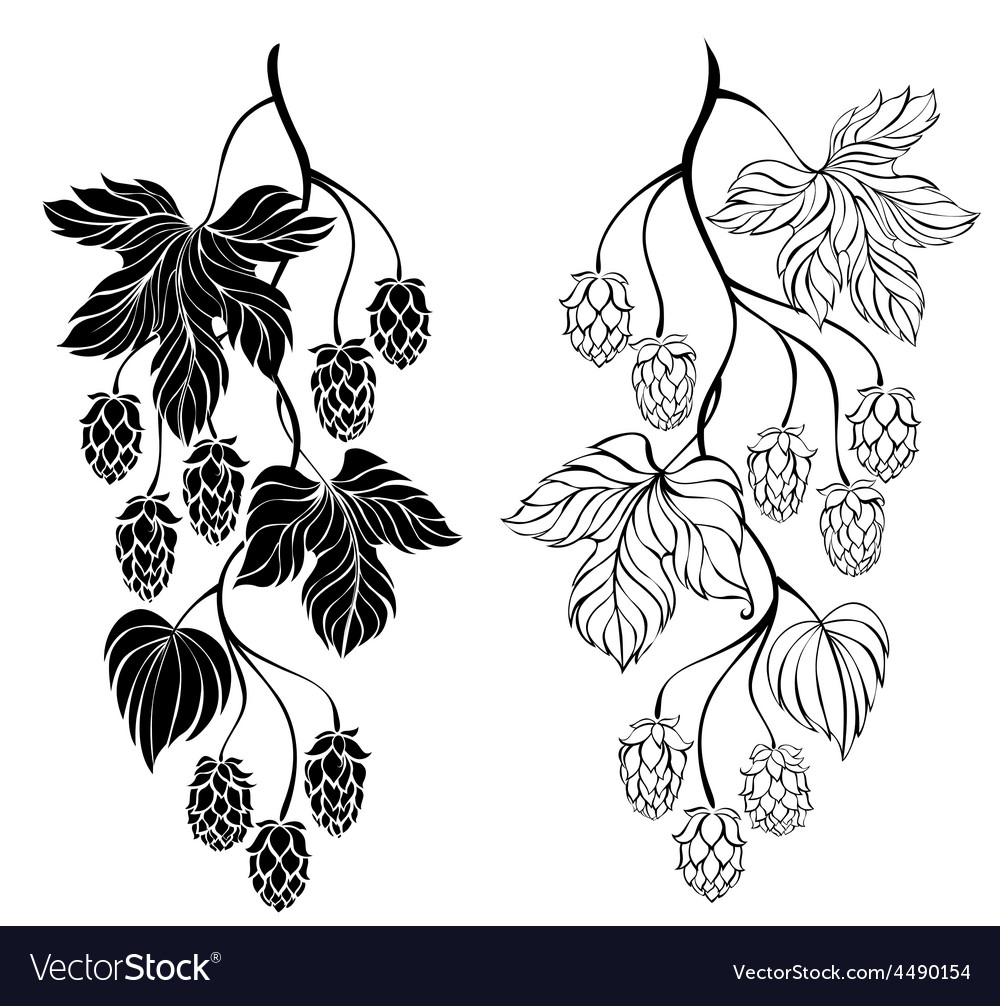 Two contour branches hop vector | Price: 1 Credit (USD $1)
