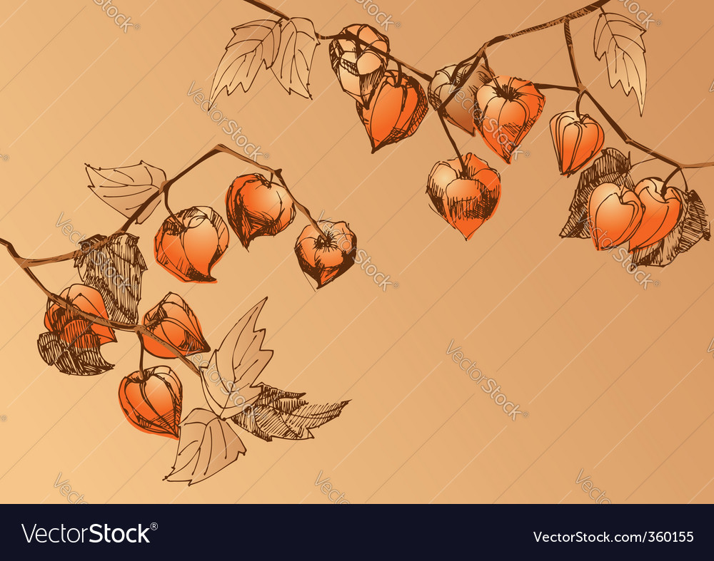 Orange chrysalis vector | Price: 1 Credit (USD $1)