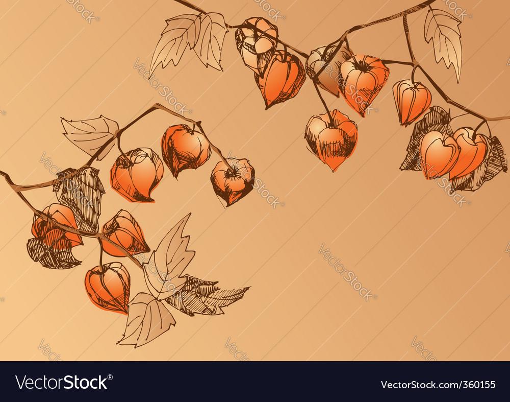 Orange chrysalis vector | Price: 1 Credit (USD $1)