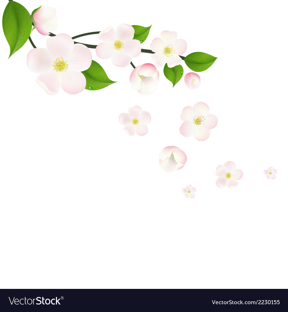 Pink apple tree flowers border vector