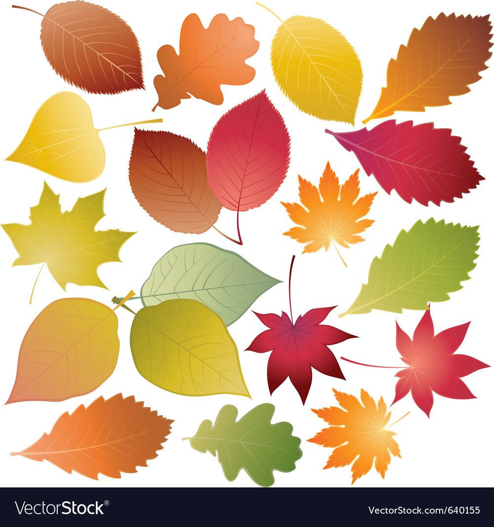 Set of colored leaves vector | Price: 1 Credit (USD $1)