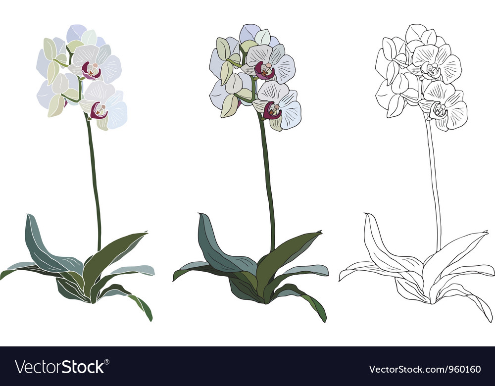 Orchid branch isolated on white background vector | Price: 1 Credit (USD $1)