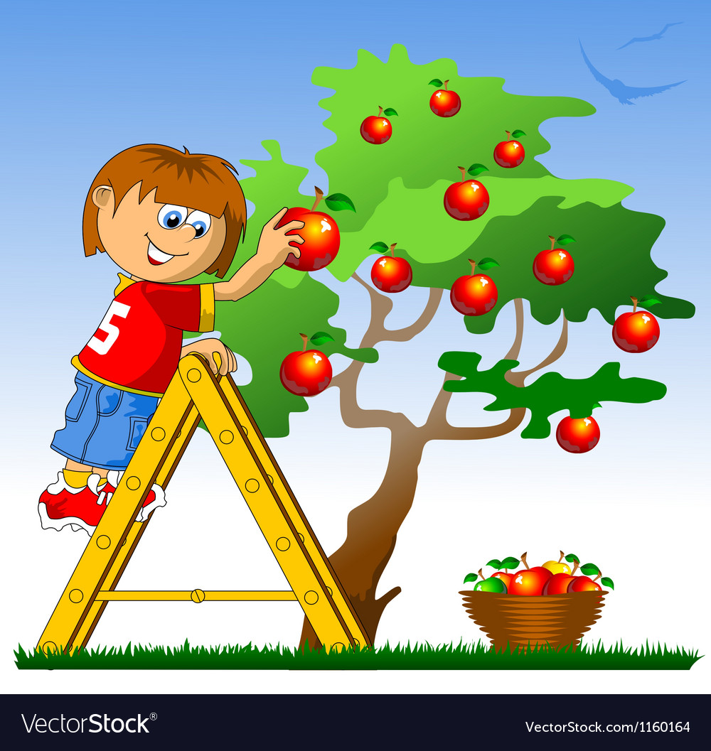 Boy picking apples vector | Price: 1 Credit (USD $1)