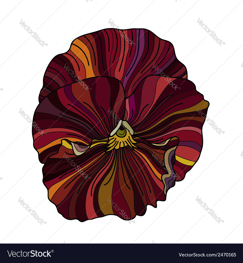 Pansy flower drawing vector | Price: 1 Credit (USD $1)