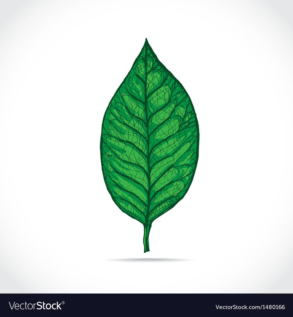 Magnolia leaf vector | Price: 1 Credit (USD $1)