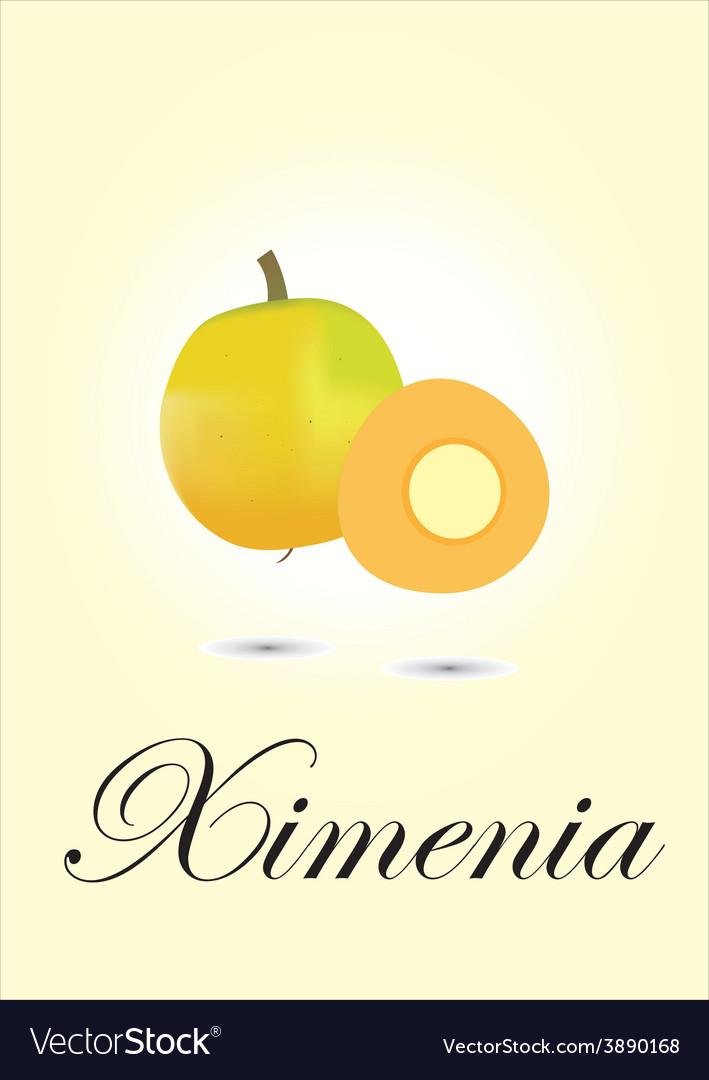 Ximenia vector | Price: 1 Credit (USD $1)