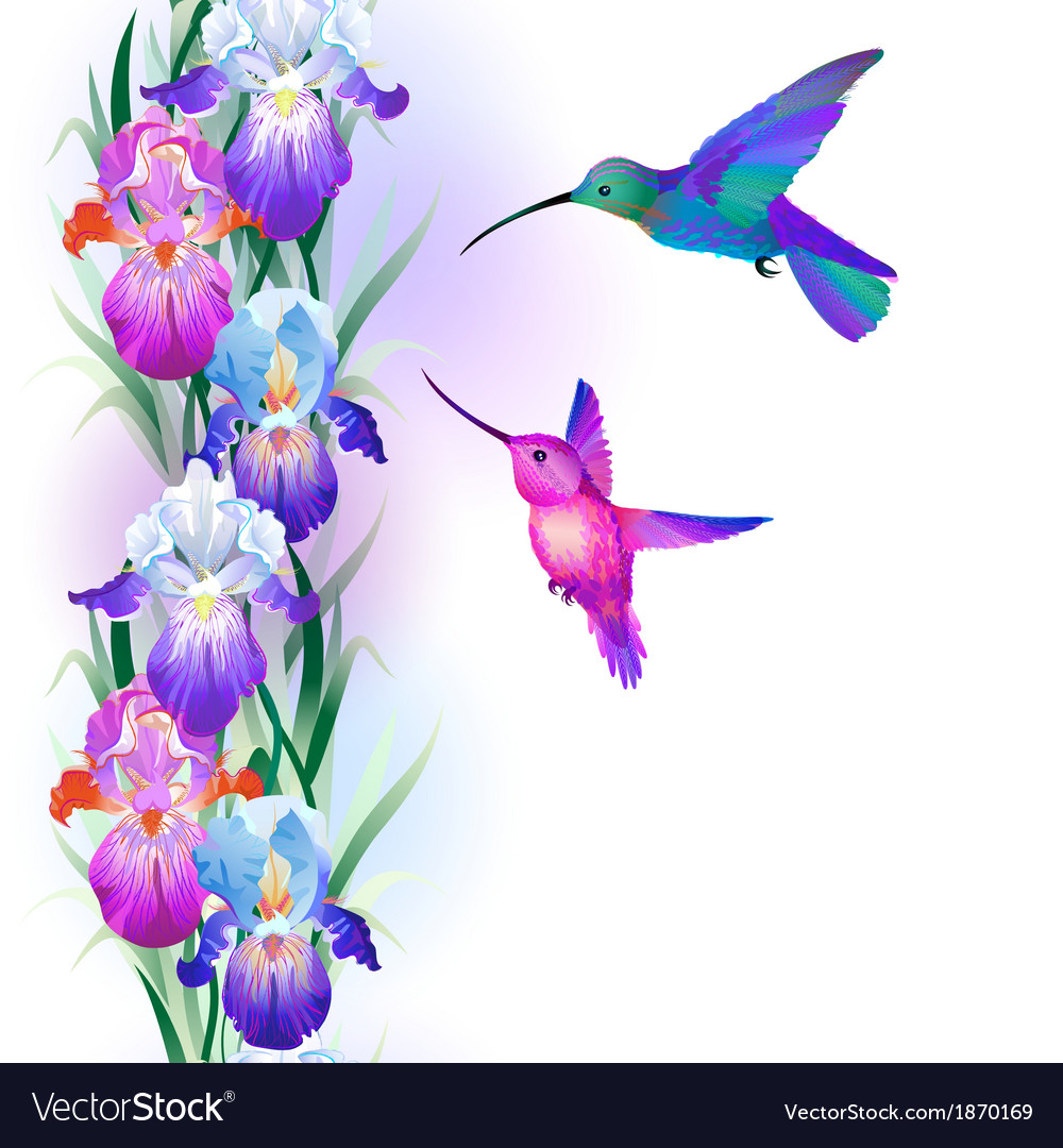 Seamless pattern with iris flowers and hummingbird vector | Price: 1 Credit (USD $1)