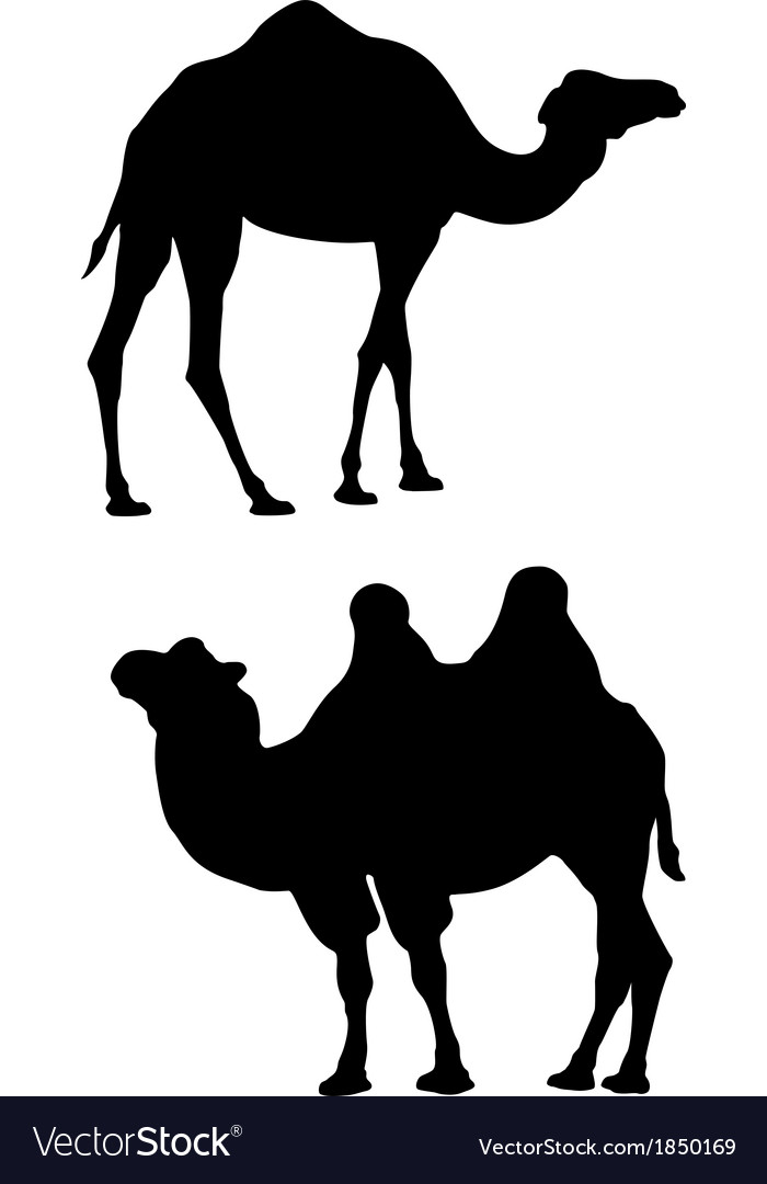 Two camels on a white background vector | Price: 1 Credit (USD $1)