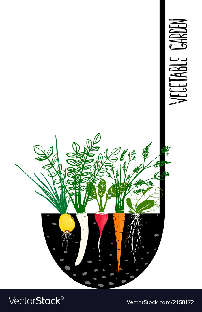 Grow vegetable garden and cook soup vector | Price: 1 Credit (USD $1)