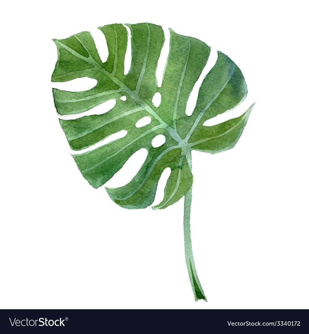 Watercolor monstera leaf vector | Price: 1 Credit (USD $1)