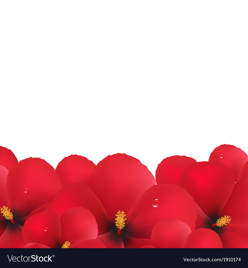 Red hibiscus flowers border vector | Price: 1 Credit (USD $1)