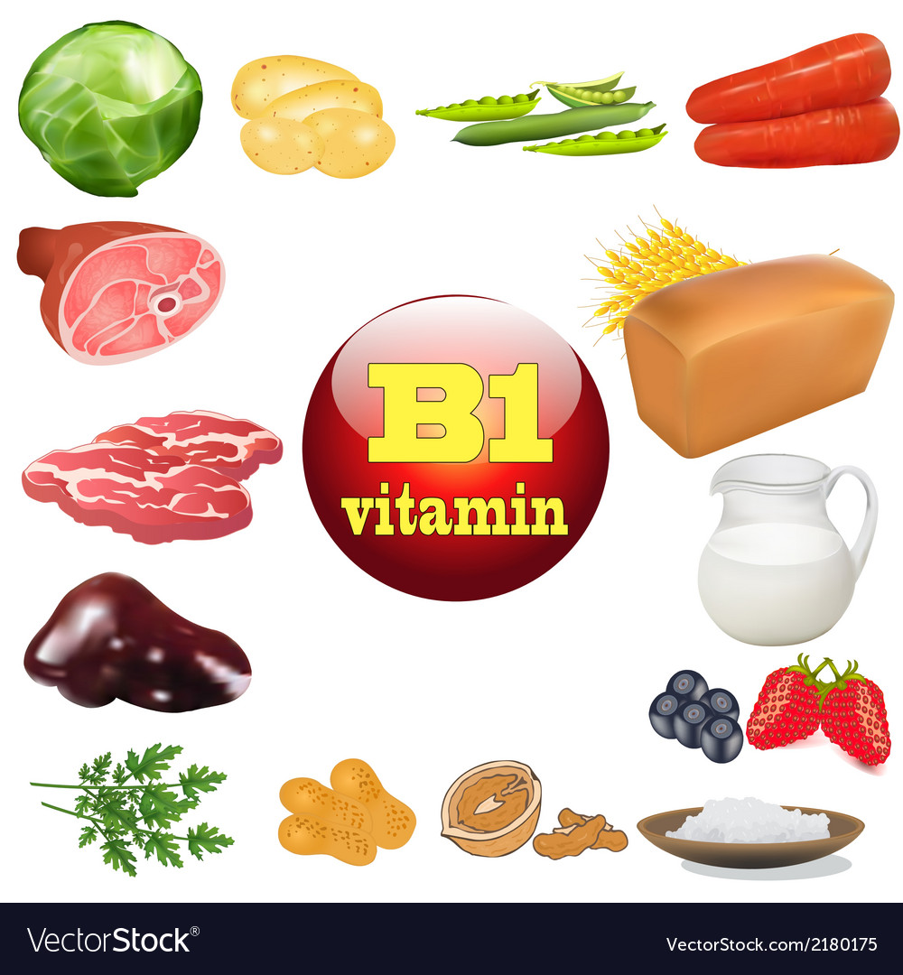 Vitamin b one in plant and animal vector | Price: 1 Credit (USD $1)