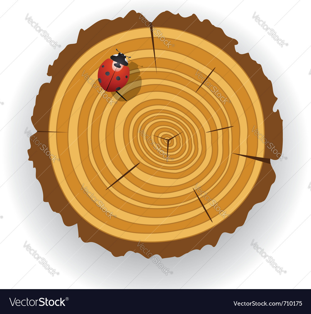 Wooden cut and ladybird vector | Price: 1 Credit (USD $1)