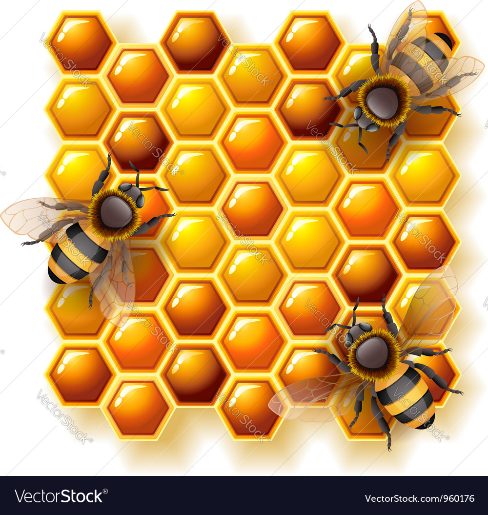 Bees and honey vector | Price: 3 Credit (USD $3)