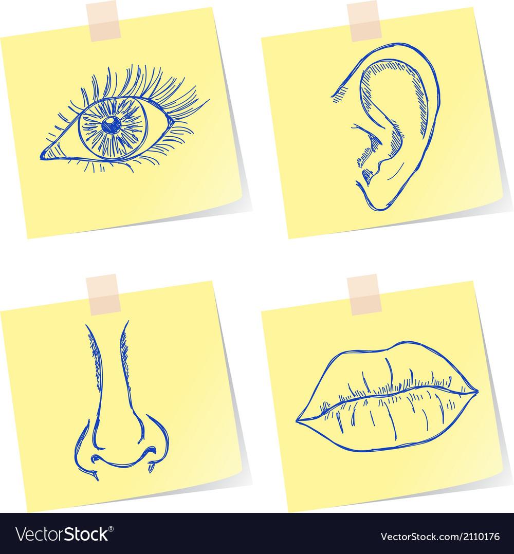 Senses sketches vector | Price: 1 Credit (USD $1)