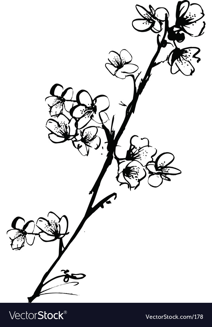 Cherry blossom ink illustration vector | Price: 1 Credit (USD $1)