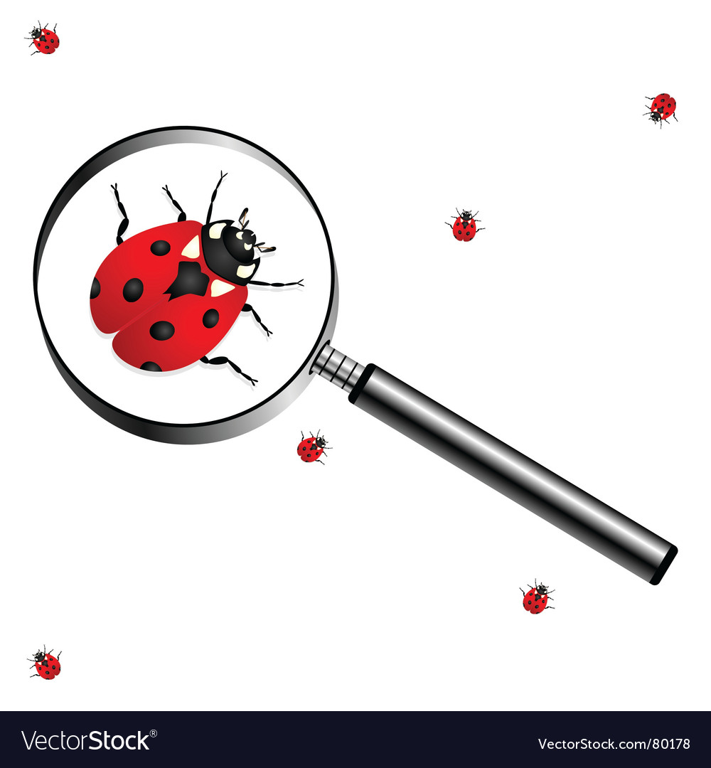 Magnifying glass with lady bugs vector | Price: 1 Credit (USD $1)